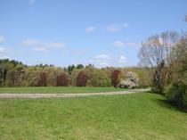 2003-05-18-field.jpg